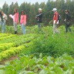 Hortas escolares são estratégia para a educação alimentar